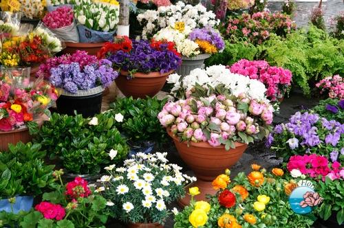 fiori e piante cemambiente